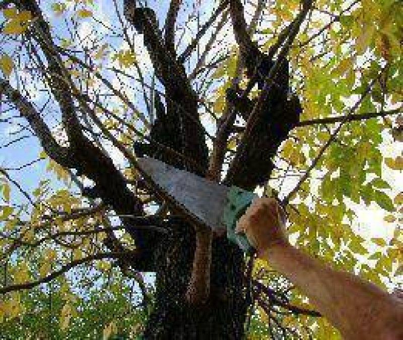 Poda responsable de árboles