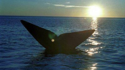 Comenzó temporada de avistaje de ballenas en Valdés