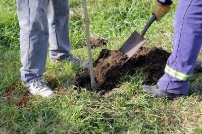 Municipio invierte 100 mil pesos en forestaci�n