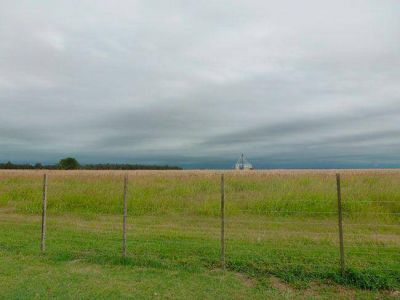 La lluvia trajo algo de alivio al campo