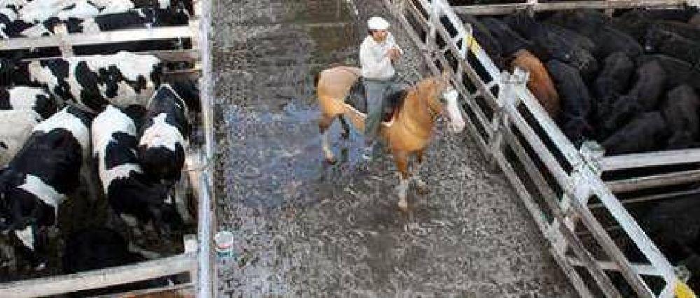 Según CRA, la ganadería perdió casi $ 15 mil millones