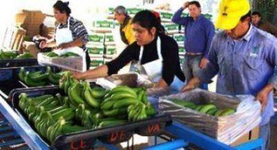 Parte nuevo envío de bananas formoseñas hacia el Mercado Central