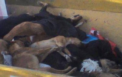 Se desconocen quiénes cometieron la matanza de perros en Deán Funes
