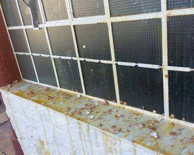 Alrededor de 20 activistas antimineros se manifiestan contra Olima en Famatina