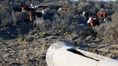 Campesinos sufren derrames y contaminación de Tecpetrol