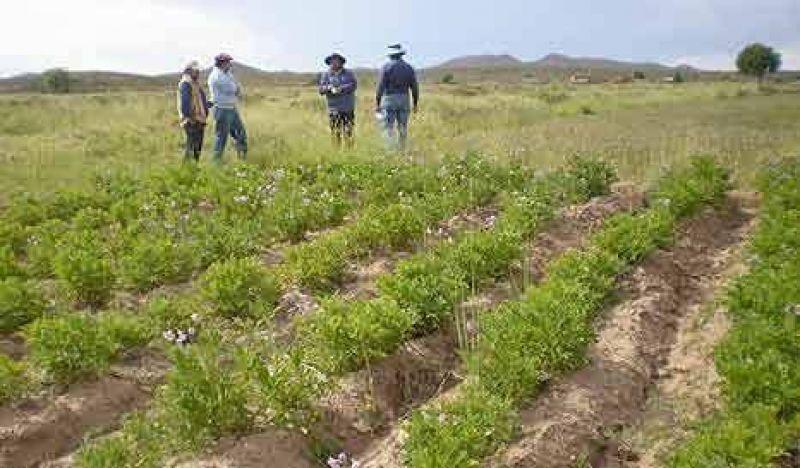 Declaran emergencia fitosanitaria en todo el país
