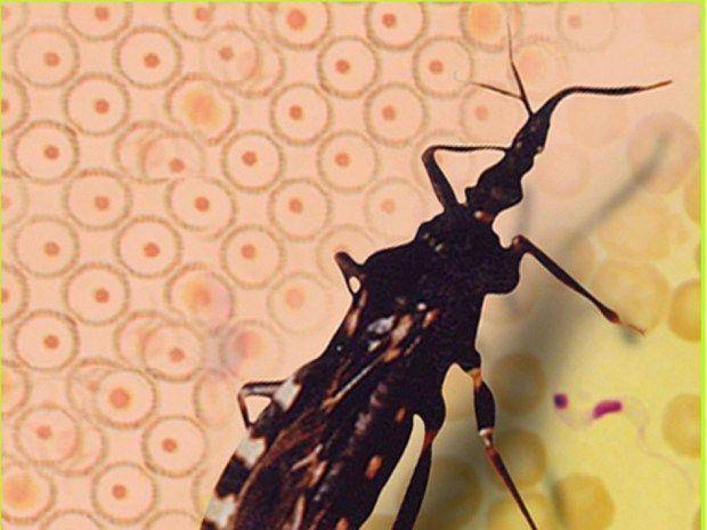 Ofrecen becas para curso referido al Chagas