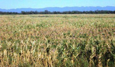 Heladas y sequía: crece la alarma