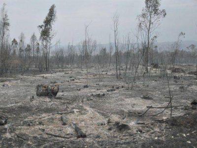 Son 2.500 hectáreas las afectadas por el incendio