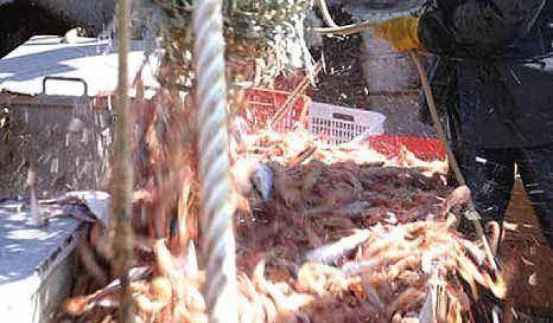 Una empresa pesquera vinculada a Néstor, acusada de depredación