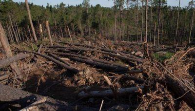 De los pinos ca�dos a los quemados