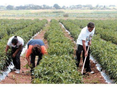 Llaman a inscribirse en Fondo Solidario Agrícola