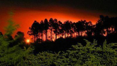 Unos 10 millones de pinos fueron arrasados por los incendios
