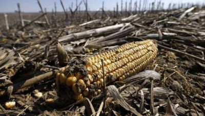 En alerta: van 105 mil hectáreas serranas quemadas y sigue el riesgo extremo