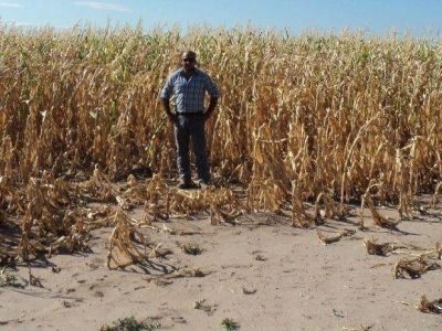 Sequía: extienden la emergencia al sur