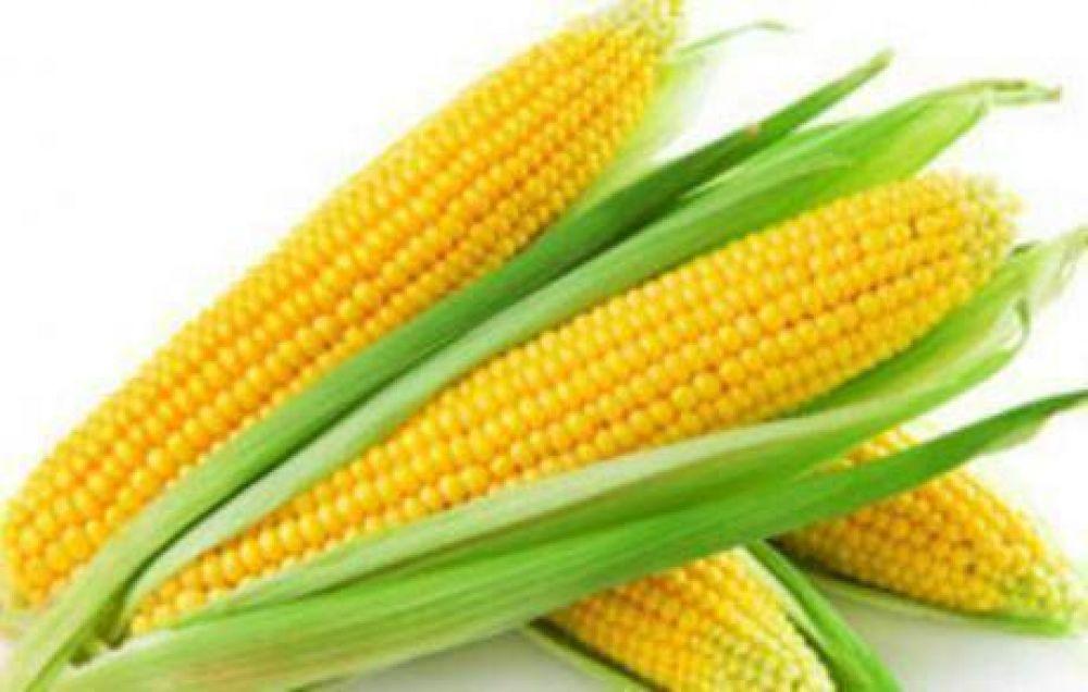 Monsanto: la semilla de la discordia