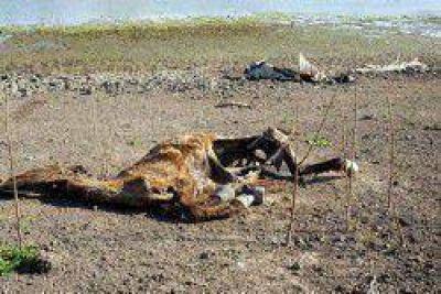 Productores del Interfluvio piden ayuda por la muerte de animales
