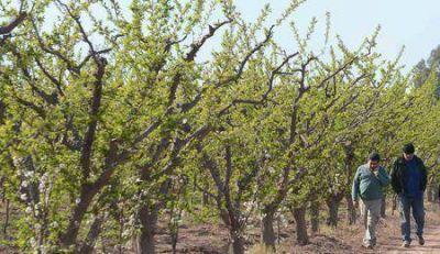 El Gobernador decretó la Emergencia Agropecuaria por las heladas