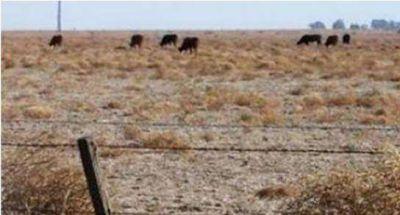 Sequía: Pérdidas por $3 mil millones