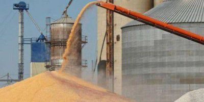 Exclusivo: las cerealeras comprar�n 500 millones de d�lares en Baade