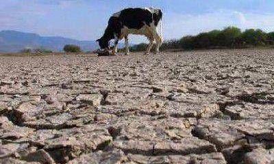 La UCR pide que el Gobierno declare la emergencia en Lavalle por la sequía