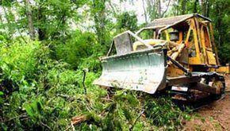 Más denuncias sobre la continuidad de la tala indiscriminada en el norte salteño