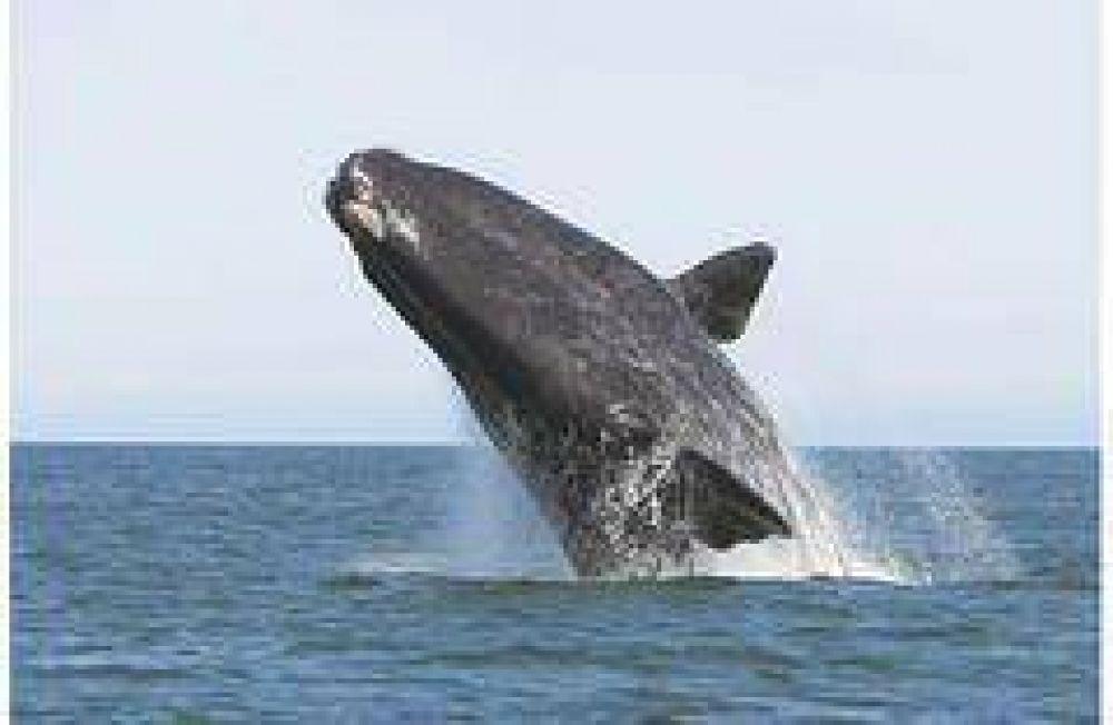 Chubut prepara la vigilia de las ballenas en Punta Pirámides
