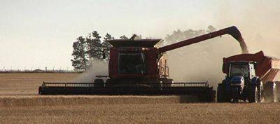 En el norte del país, las lluvias demoran la recolección del trigo