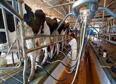 La mano de obra en la producción lechera: Análisis y propuestas
