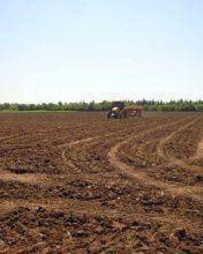 Ante las lluvias extienden a mediados de mes fecha de siembra del algodón