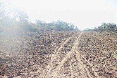 El Banco Mundial tambi�n denunci� un posible desmonte ilegal en el Chaco