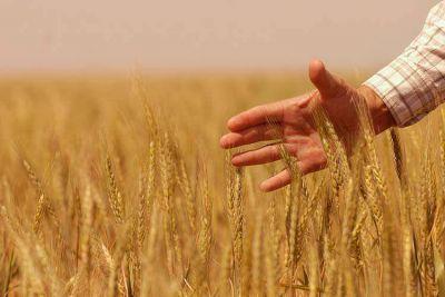 La producci�n de trigo promete crecer el 49%