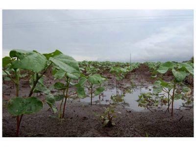 Luego de la lluvia, el campo pasó de sequía a saturación de suelos