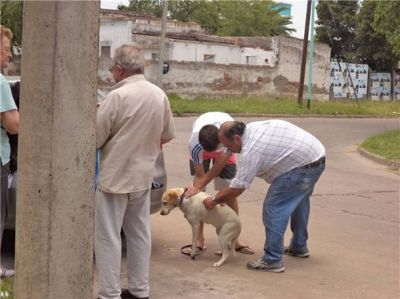 Se implementa la campaña de vacunación antirrábica para perros y gatos