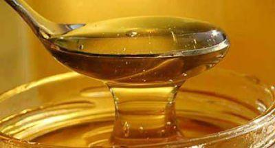 Anticipan buena cosecha de miel
