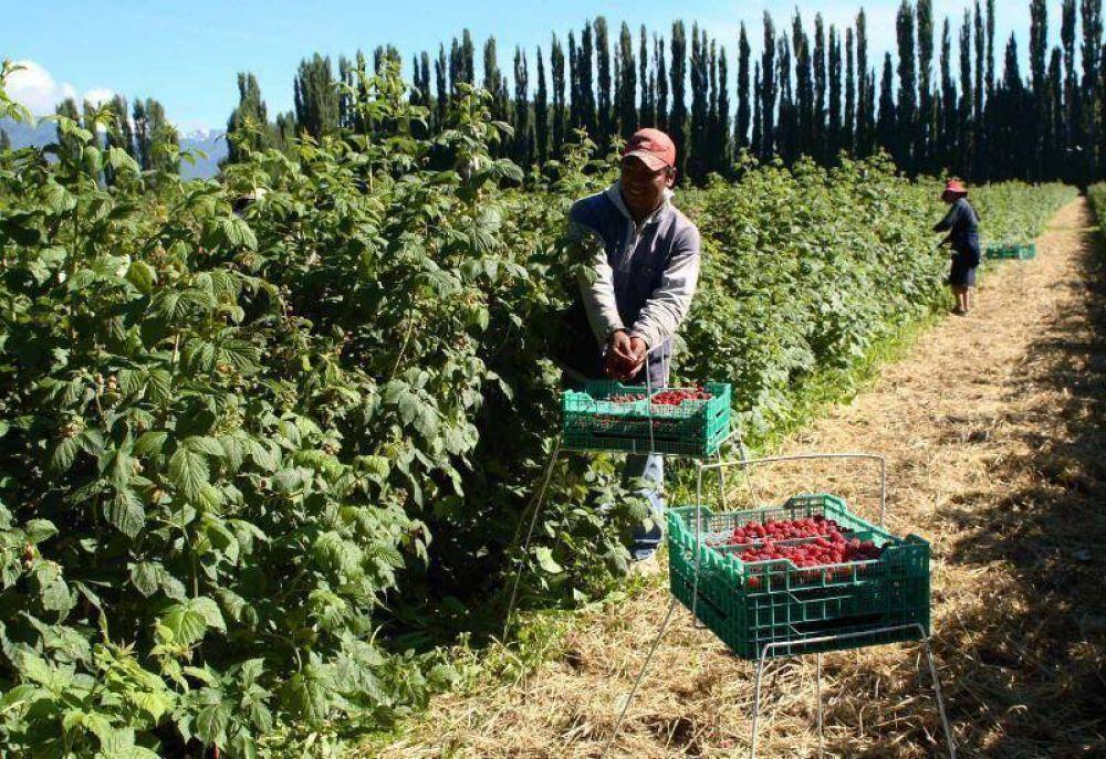Productores de fruta fina contra barreras internas