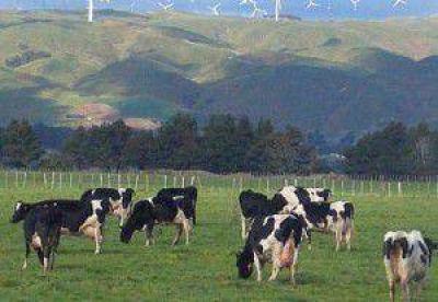 Chile: La producción #lechera de NZ aumentó 8,3% en setiembre