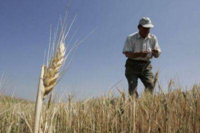 Proyectan un fuerte incremento en las exportaciones de trigo